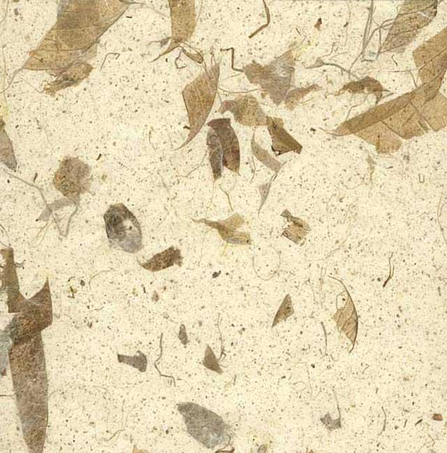 variation image